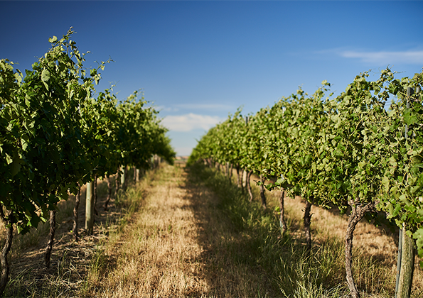 about-the-barossa-banner